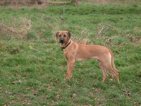 Daisy-dog-training-kent-the-dog-trainer-medway-towns-strood-gillingham-chatham-rochester