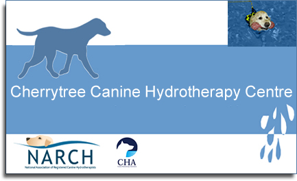 cherrytree hydrotherapy centre canine hydro for dogs kent dog training kent