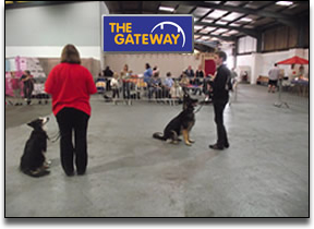dog-training-puppy-training-group-classes-in-kent-www.thedogtrainer-queenborough-sheerness-medway-sittingbourne