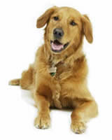 dog training kent rochester dog home visits chatham gillingham rainham dog trainer